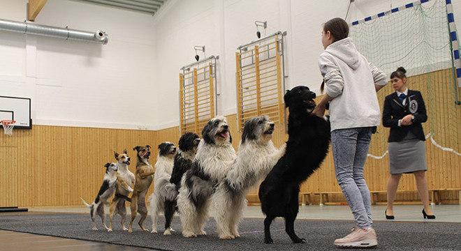 Todos treinados para a apresentação