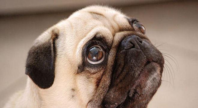 cães mais propensas