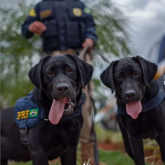Laradores do Grupo de Operações com Cães, da Polícia Rodoviária Federal