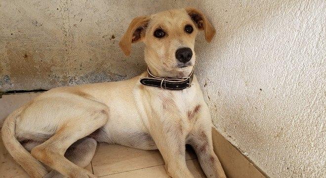 Cachorra que foi encontrada cavando uma área onde dono foi soterrado