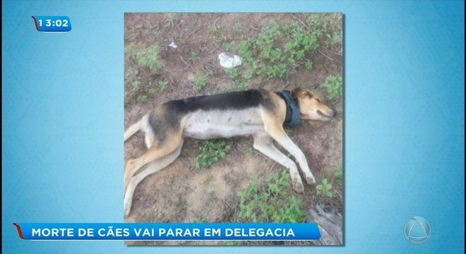 Cães são mortos a tiros em Riachão do Dantas