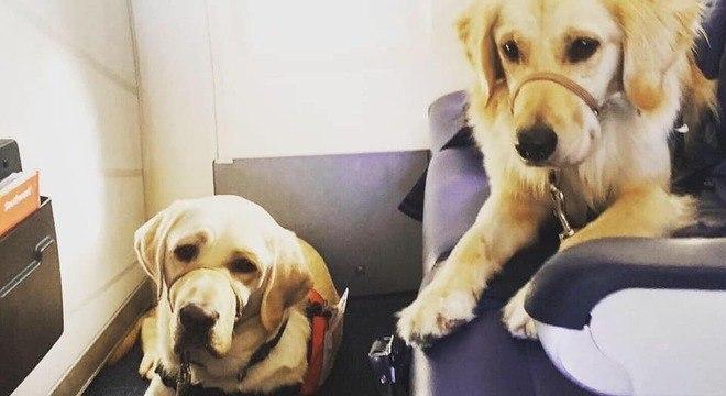 Cachorros devem auxiliar na recuperação de vítimas e socorristas