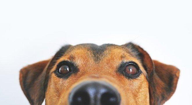 Manter a vacinação em dia garante a saúde dos pets e da família