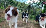 No Facebook, a aventura dos cachorros acabou explodindo o fofurômetro dos internautas, que não pararam de comentar o quanto eles eram fofos
