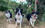 A boa notícia é que o tutor dos cães não ficou nem um pouco bravo e resolveu fotografar o momento7 vezes em que animais renderam fotos hilárias e causaram na web