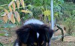 Enquanto seu tutor colhia pitayas madurinhas, os cachorros não resistiram e