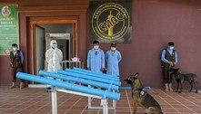 Cães são treinados para detectarem Covid-19 no Camboja