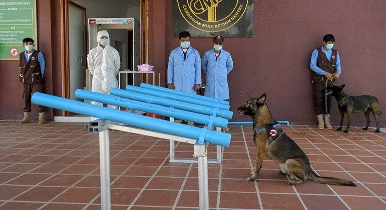 Cães que estão sendo treinados são utilizados para detectar explosivos subterrâneos