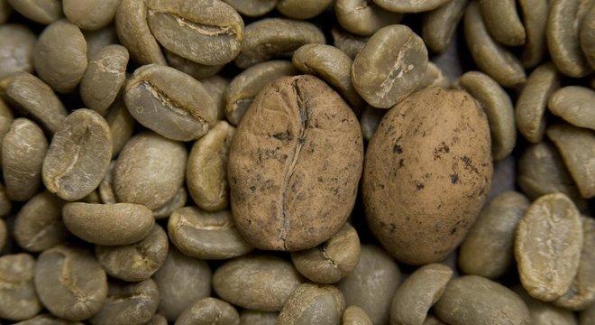 O café Ambongo, de Madagascar é uma das variedades em risco