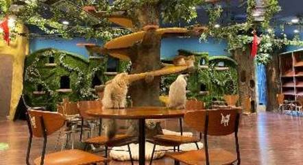 Café onde é possível interagir com gatos