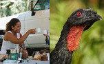 Já imaginou pagar mais de R$ 700,00 para desfrutar um café produzido com fezes de pássaro? Esse é o ingrediente especial do Jacu Bird Coffee, ou Café de Jacu, um dos mais caros do mundo