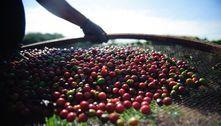 Preço do café deve subir 40% com quebra da safra e exportações