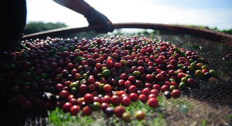 Os estados mais afetados pelas condições climáticas no cultivo do café são Minas Gerais, São Paulo e Paraná