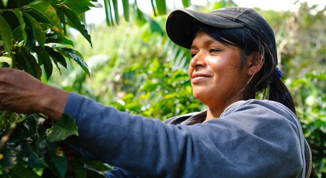 Iniciativa quer valorizar a igualdade de gênero no setor cafeeiro