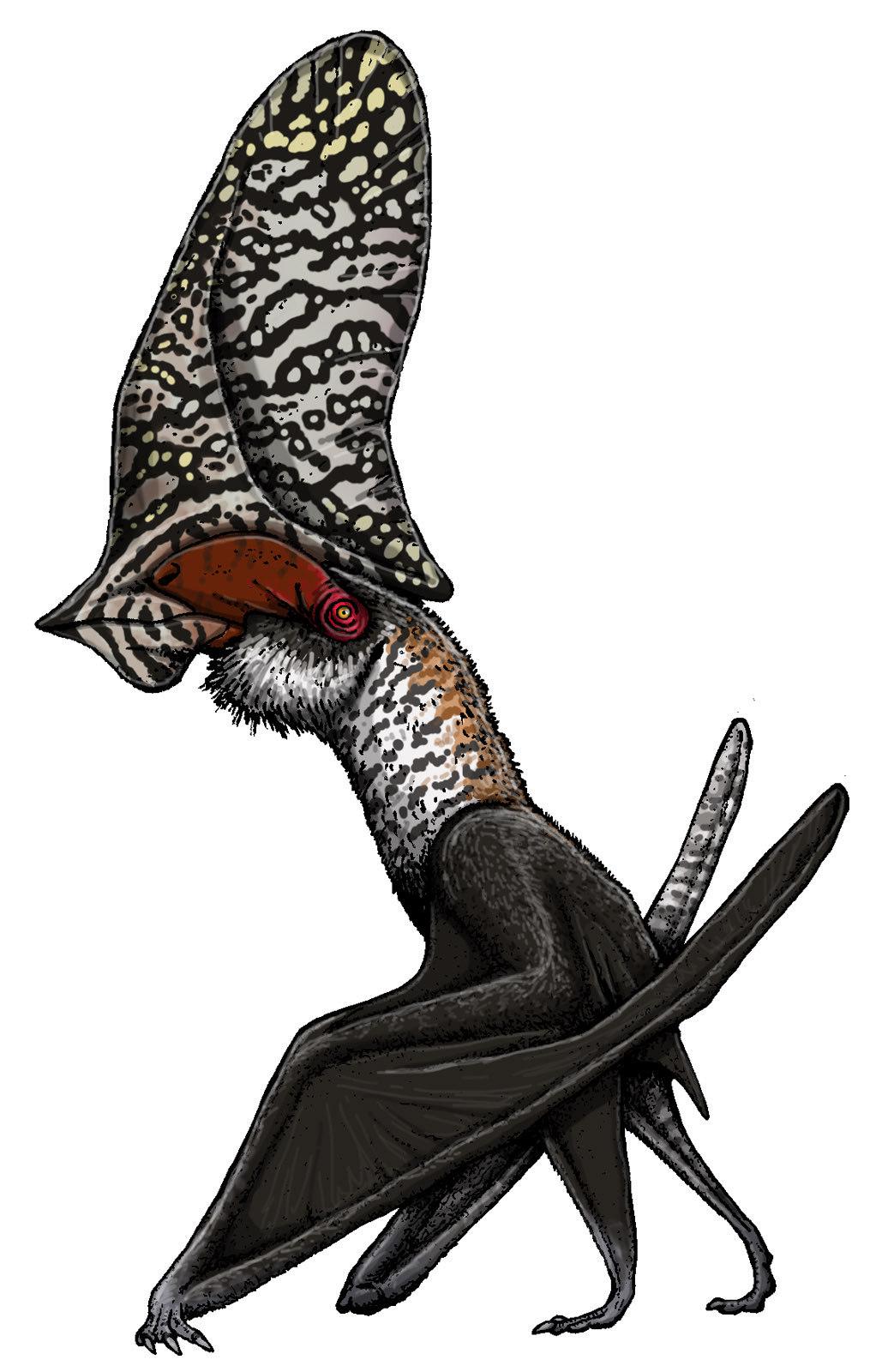 Caiuajara dobruskii, uma espécie menor de pterossauro, atingia cerca de 2,80 metros