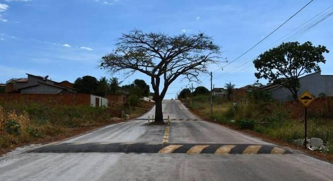 Pé de cajá ocupa parte da pista de uma avenida em Paraíso do Tocantins (TO)