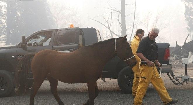 Animais foram mantidos em praia enquanto bombeiros continham chamas
