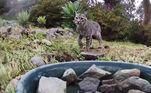 Dos mais selvagens...Veja mais:Gato de duas patas faz sucesso e viraliza nas redes sociais