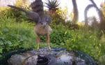 Jennifer George mora na Califórnia, nos Estados Unidos, e, em um dia de verão de 2019, ela decidiu colocar uma tigela de metal em seu quintal para ajudar os animais a obterem água. No entanto, depois de perceber a movimentação que o novo oásis tinha gerado, ela instalou uma fonte e uma câmera fotográfica para captar a movimentação