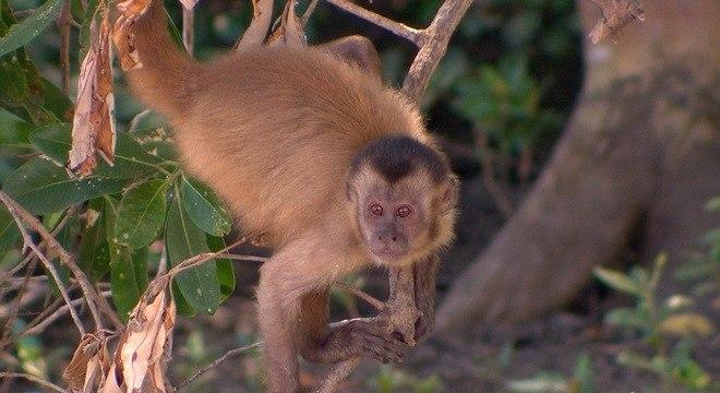Durante 23 anos, pesquisadora americanos estudaram o comportamento destes animais