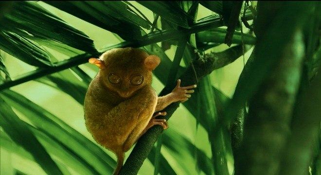 Romeu Piccoli viajou às Filipinas, onde conheceu espécies curiosas como o Társio
