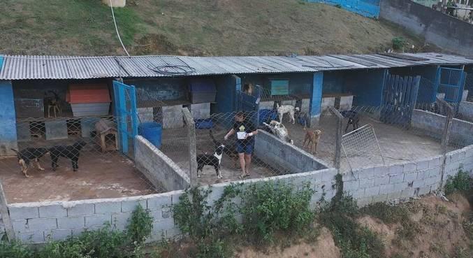 Pesquisa aponta que o número de animais abandonados aumentou 70% durante a pandemia