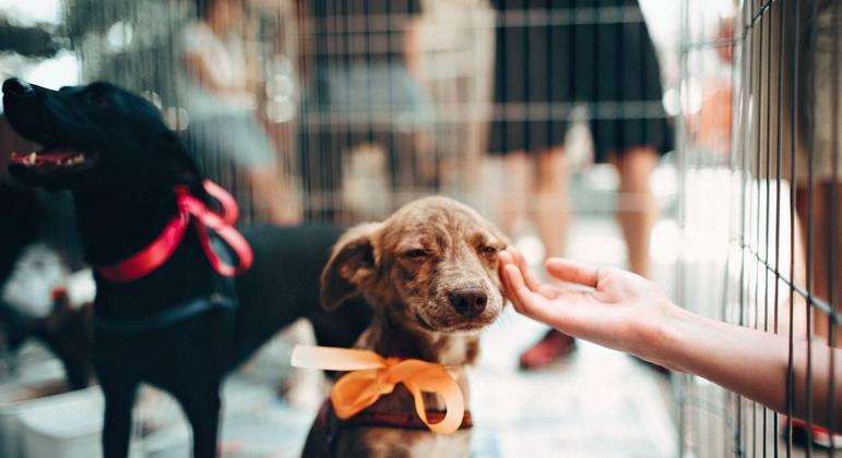 Todos os animais para adoção já estão vacinados, vermifugados e castrados