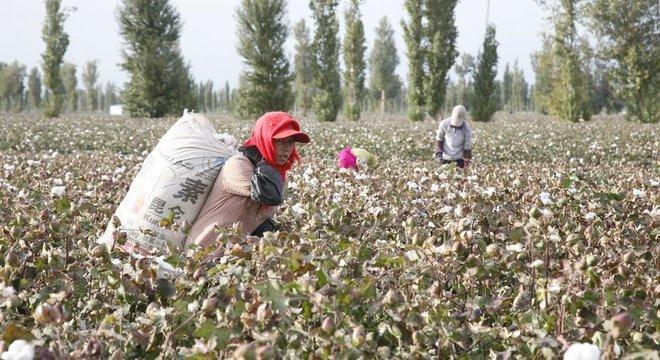 Xinjiang produz cerca de 80% do algodão da China