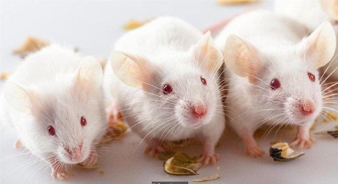 Pesquisas recentes descobriram que camundongos alimentados com material particulado apresentaram sinais de expressão gênica imune alterada