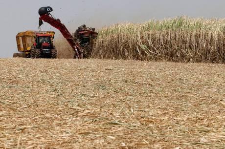 Produtores de cana de açúcar estão apreensivos