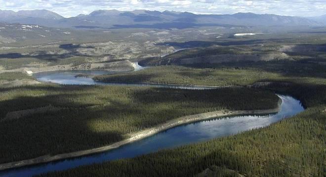 Objetivo é que técnica de reflorestamento seja usada em diversas áreas