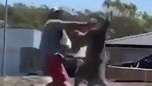 Homem é nocauteado por canguru ao tentar proteger filhos em quintal