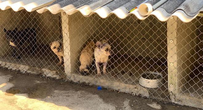 Cães foram encaminhados a ONGs após tosa e castração
