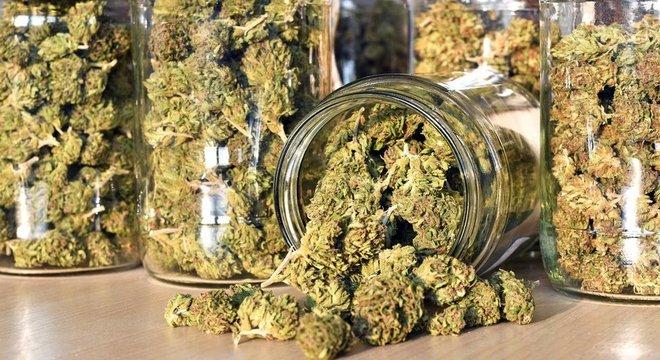 No Brasil, plantar Cannabis é crime e pode ser punido com prisão