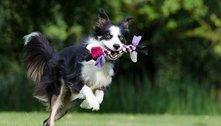 Cães aprendem uma nova palavra depois de escutá-la 4 vezes