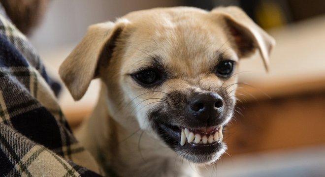A personalidade do dono afeta as concentrações do cortisol no seu cachorro