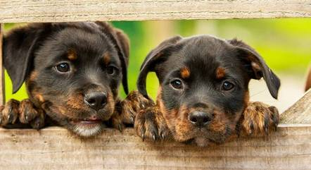 Casal adotou seis cachorros durante o relacionamento