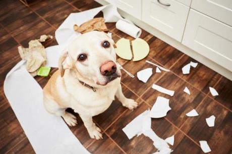 cão desobediente
