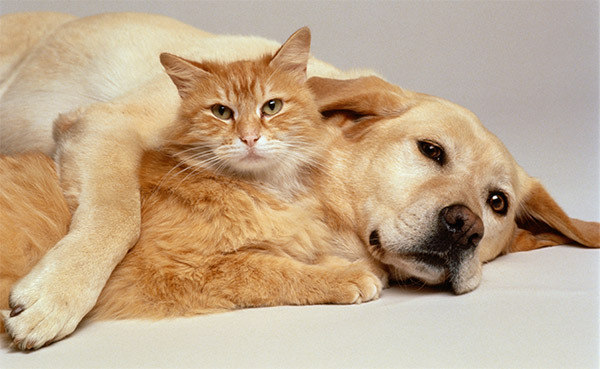 Resultado de imagem para gatos e cachorros