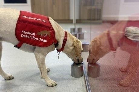 Cães serão treinados para detectar covid