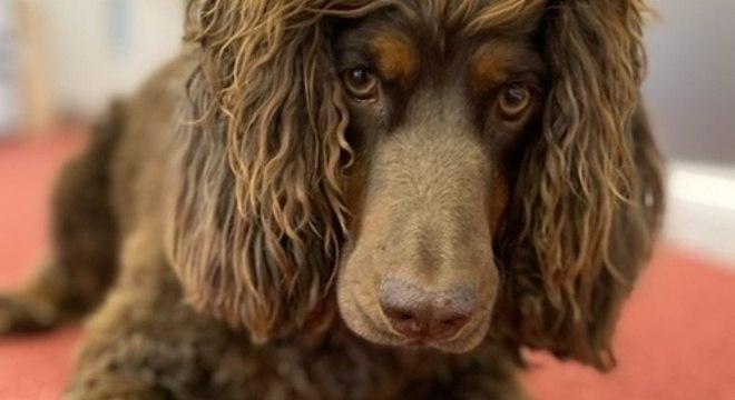 Asher, primeira cachorra a integrar a equipe