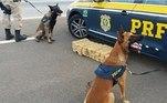 Cão farejador, PRF