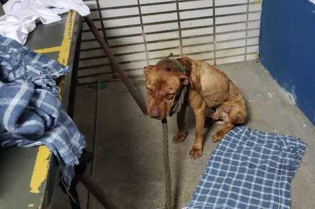 Cão resgatado em Mairiporã em dezembro do ano passado