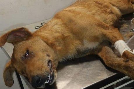 Cão foi envenenado e esfaqueado em BH