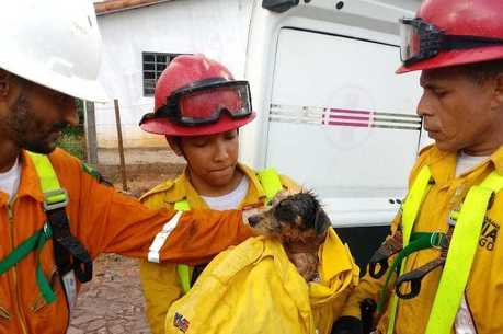 Cão foi resgatado por voluntários