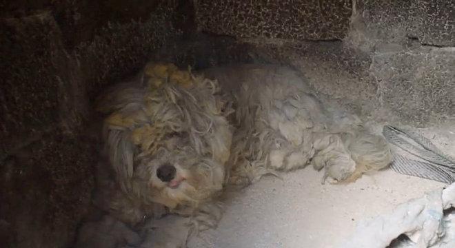 O pequeno cachorro se abrigou em churrasqueira para fugir do incêndio na Grécia