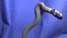 Cão descobre serpente mortal em banheiro e deixa dona apavorada