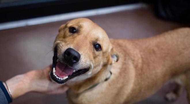 Foco da campanha é a vacinação de cães e gatos domésticos
