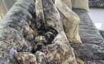 Tem como resistir a esse focinho surgindo entre as almofadas?Leia mais:Câmera flagra cachorros destruindo lição de casa do dono