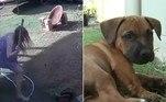 O cãozinho acima conseguiu ser salvo pela dona antes que terminasse estrangulado por uma píton-carpete, no quintal da casa onde vive, na cidade australiana de Sunshine Coast